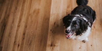 Wood Floor Care Tips