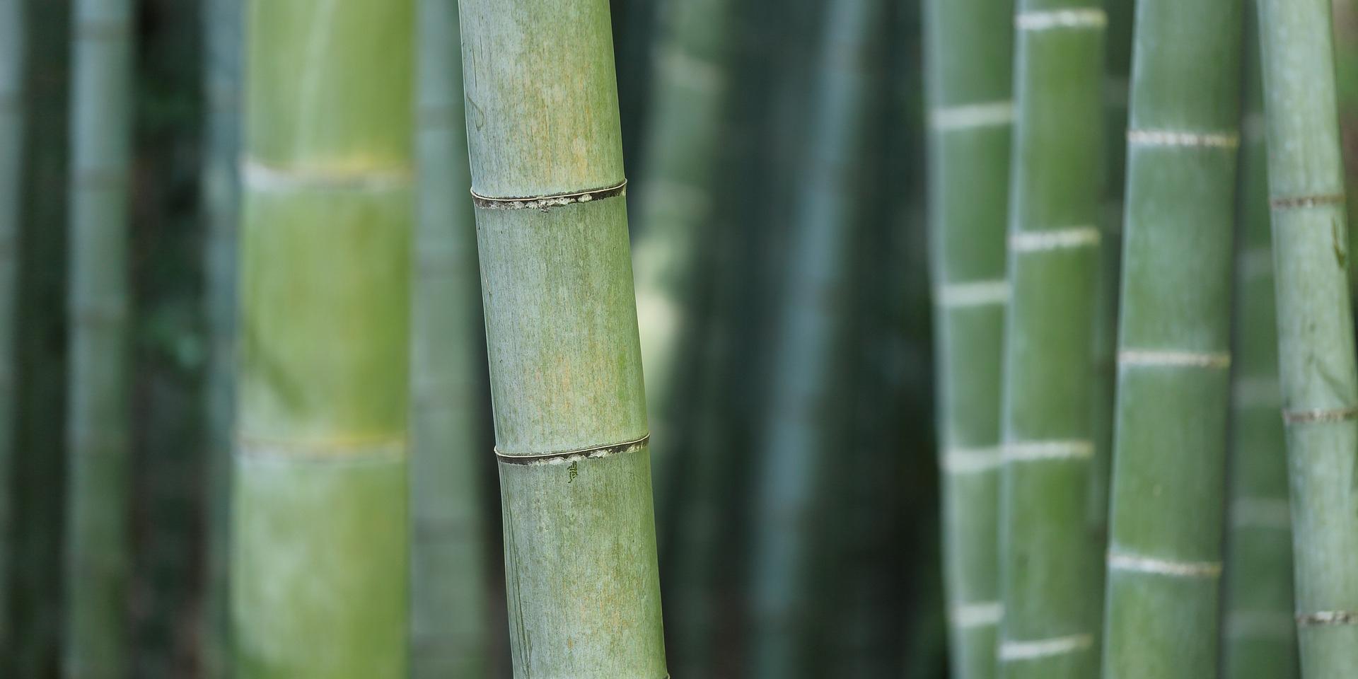 cane bamboo flooring