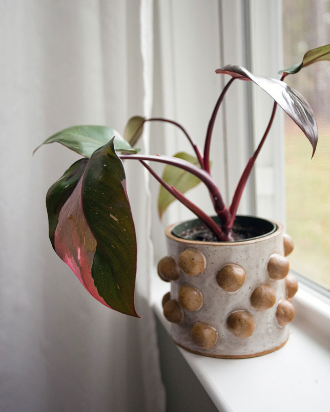 houseplant trend pink plant