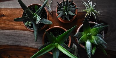 6 On-Trend Houseplants For A Naturally Inspired Home