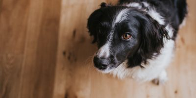 Looking after wood flooring with pets and children