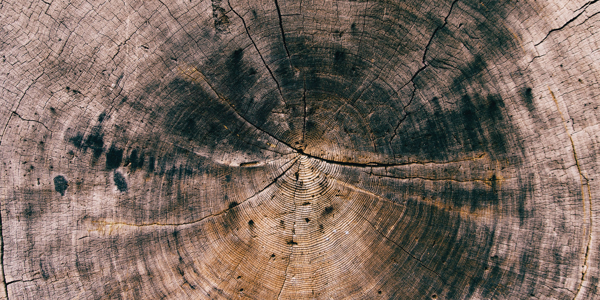 biophilic design tree