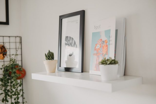 shelf plants